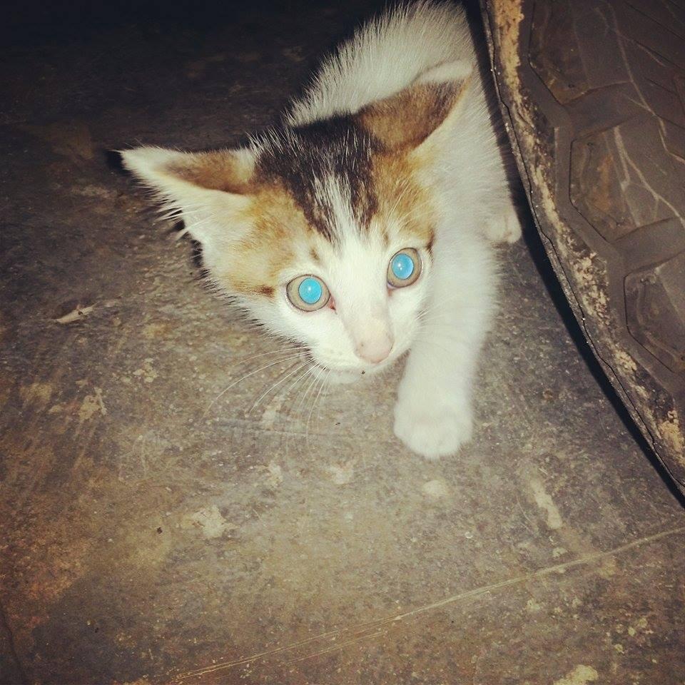Cara Hilangkan Gam Pada Bulu Kucing, Cara Hilangkan Gam Lalat Pada Bulu Kucing, Cara Hilangkan Gam Yang Melekat Pada Kucing, Petua Hilangkan Gam Pada Bulu Kucing