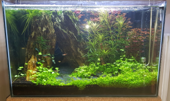 Paludarium Low-Tech 1d827bc76b